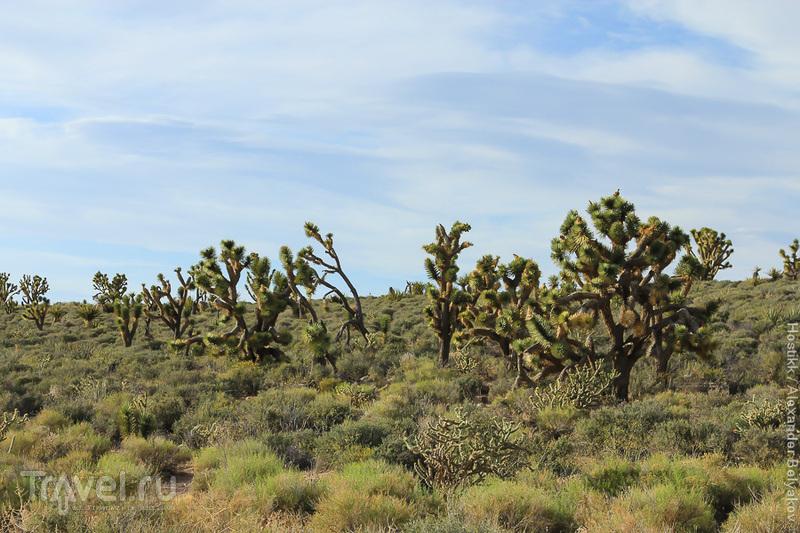 Путешествие по штатам  Калифорния, Невада, Аризона / США