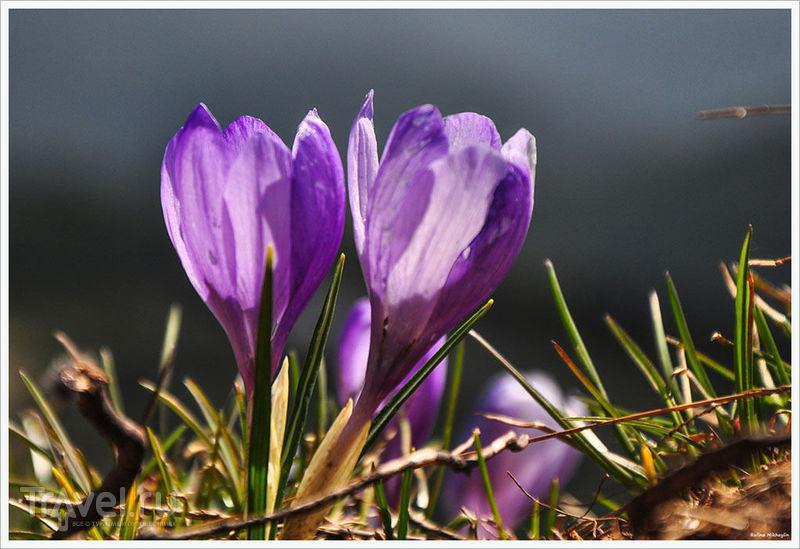 Рила в мае: Снежно-фиолетовый коктейль / Фото из Болгарии