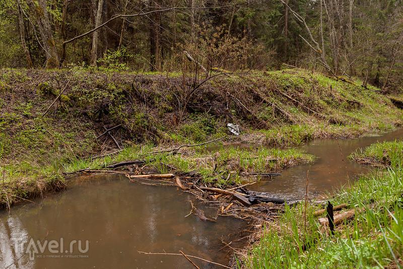 Прогулка в Завидовском заповеднике / Фото из России