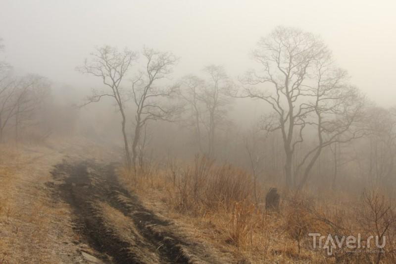 Весенние туманы на полуострове Гамова / Россия