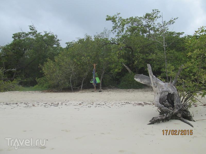 Галапагосы. Остров Санта-Крус. Пляж Тортуга Бэй / Эквадор