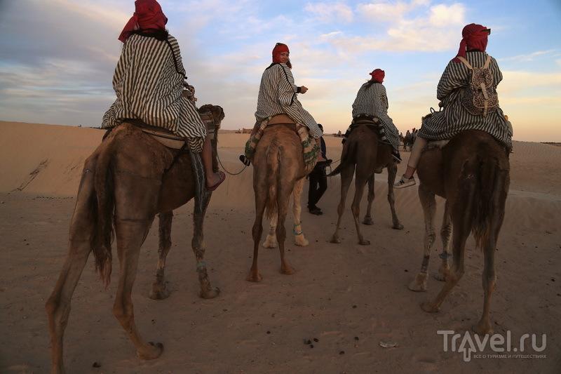 """Покатушки"" на верблюдах / Фото из Туниса"