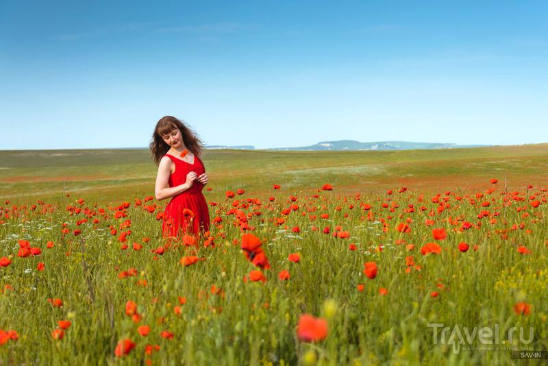Цветущий Крым. Маки / Фото из России