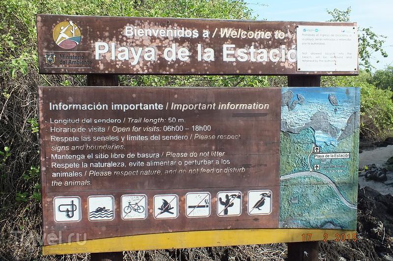 Галапагосы. Остров Санта-Крус. Город Пуэрто-Айора. Пляж Play de la Estacion / Эквадор
