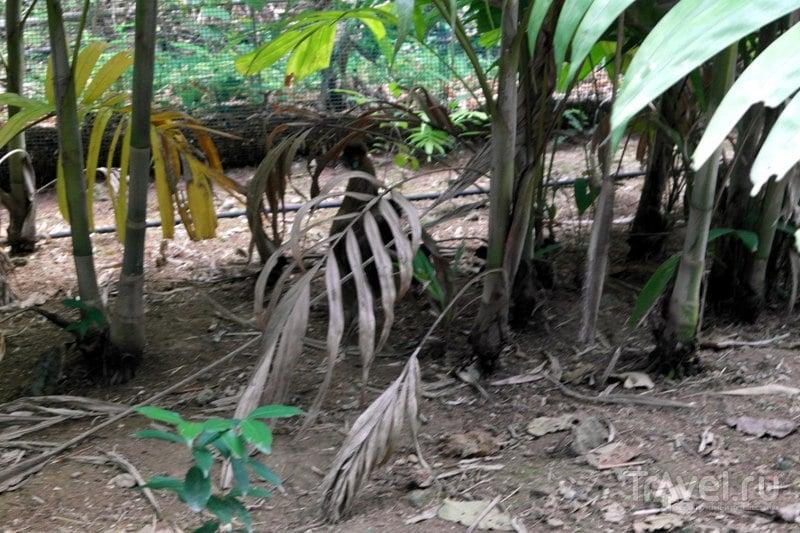 Очо-Риос, Ямайка - Черепаший водопад и сад: обитатели / Ямайка