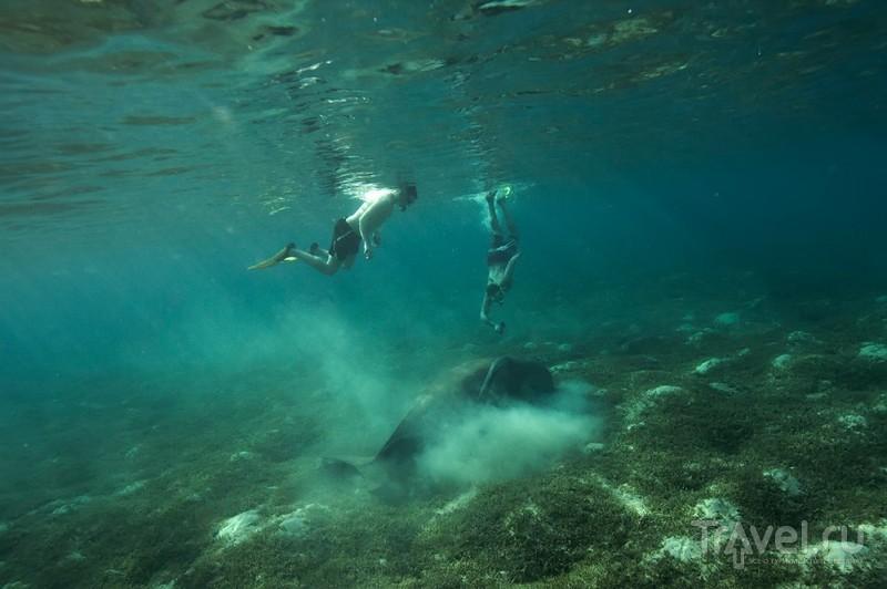 Египет подводный / Египет