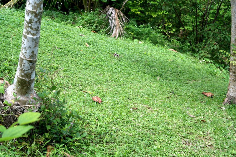 Очо-Риос, Ямайка - Черепаший водопад и сад / Ямайка