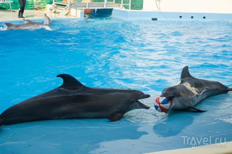 Дельфины любят играть