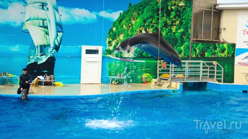 Дельфины - отличные прыгуны