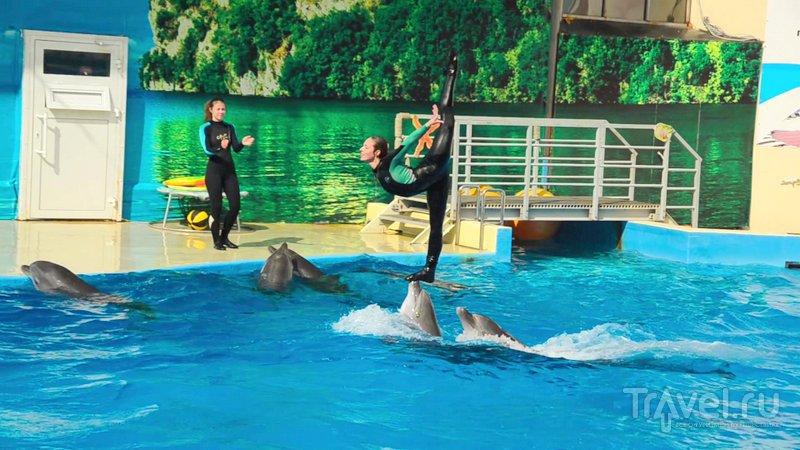 Один из самых эффектных номеров дельфинария