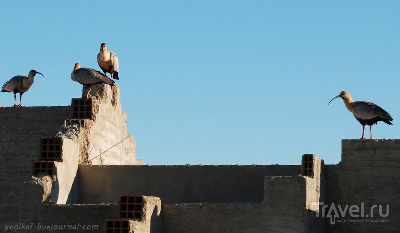 Чили - сбыча мечт! Патагония. Аргентина. Ибисы прилетели! / Фото из Аргентины