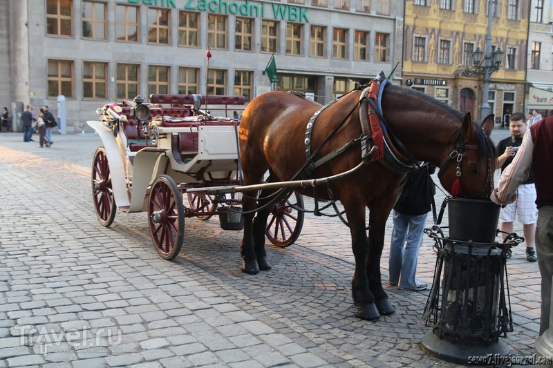 Вроцлав. Прогулка с рыночной площади в синагогу / Польша