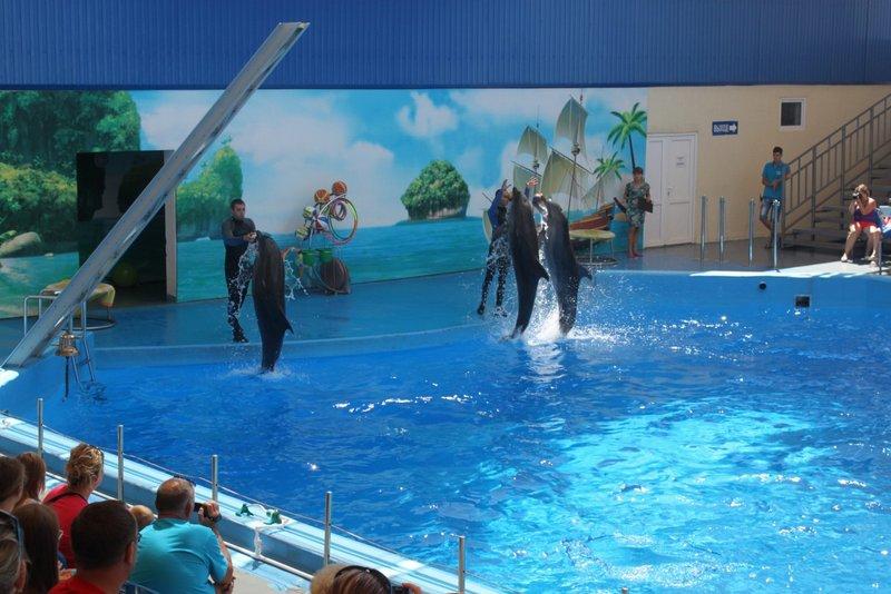 Дельфины - главные звезды представления