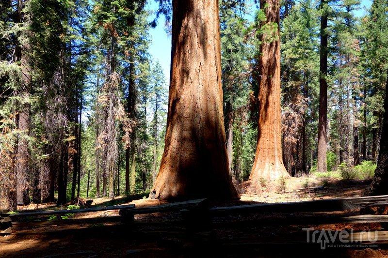 США: Национальный Парк Йосемити - горы и водопады / Фото из США