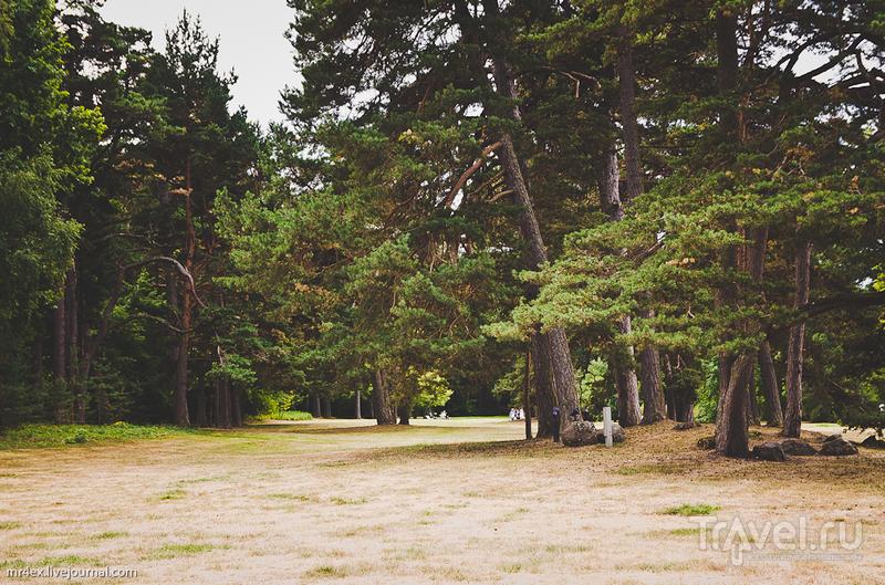Парк в Паланге / Литва