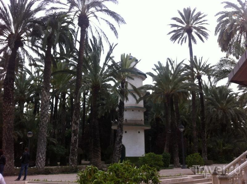 Пальмы в Эльче