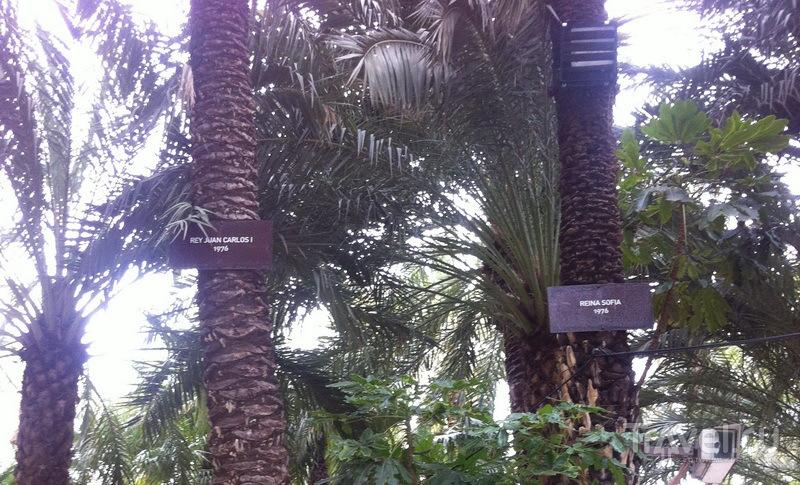 Пальмы короля Хуана Карлоса 1 и королевы Софии – 1976 г