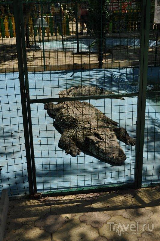 В Экзотик-парке можно увидеть огромных крокодилов...