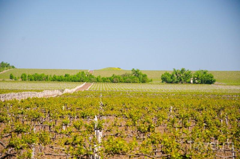 Еще один курган и виноградные поля - их на Тамани очень много