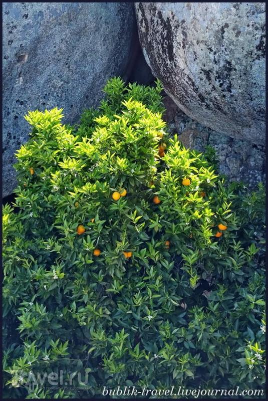 Монсанто. Каменное чудо света / Фото из Португалии