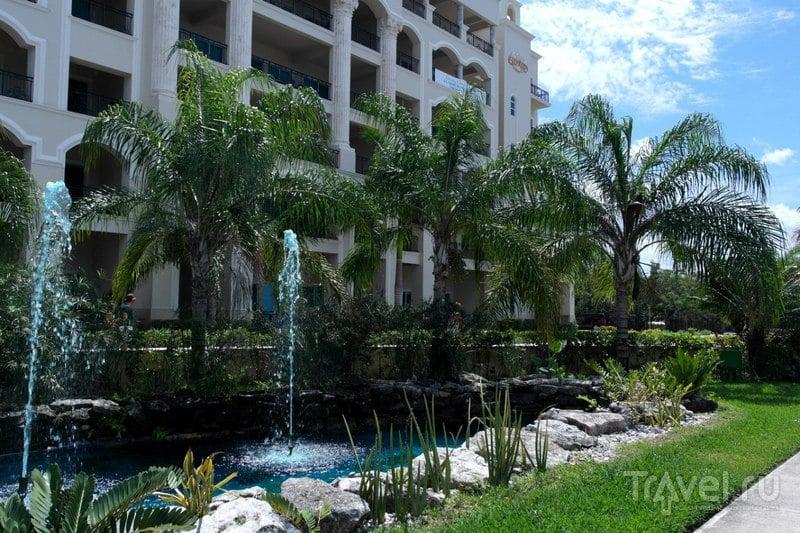 Косумель. Мексика - Животный мир острова / Мексика