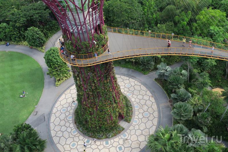 Сингапур: Сады будущего / Фото из Сингапура