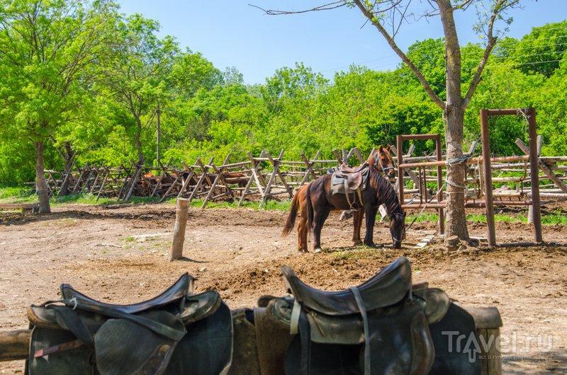 В хозяйстве около 15 лошадей