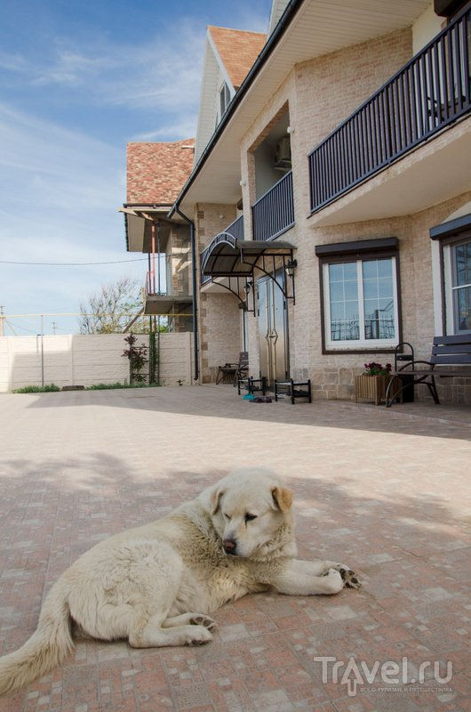 Хранитель отеля - славный и добрый пес