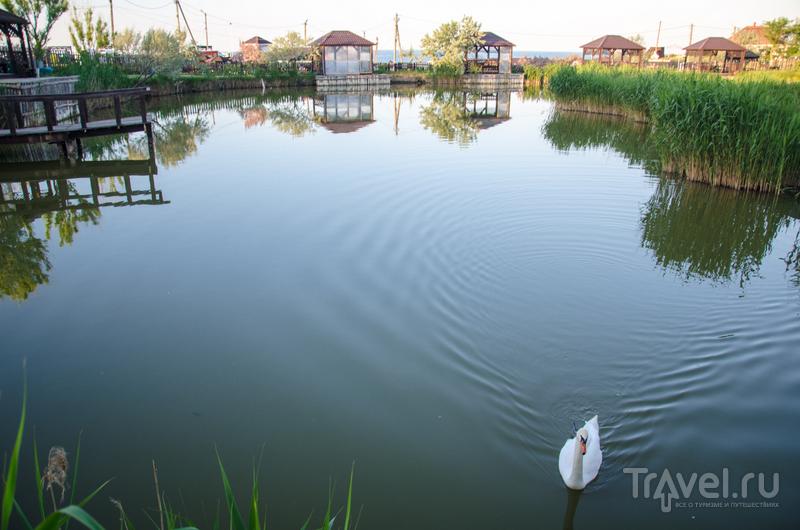 Зарыбленный пруд с беседками на берегу: в нем плавают лебеди и гуси