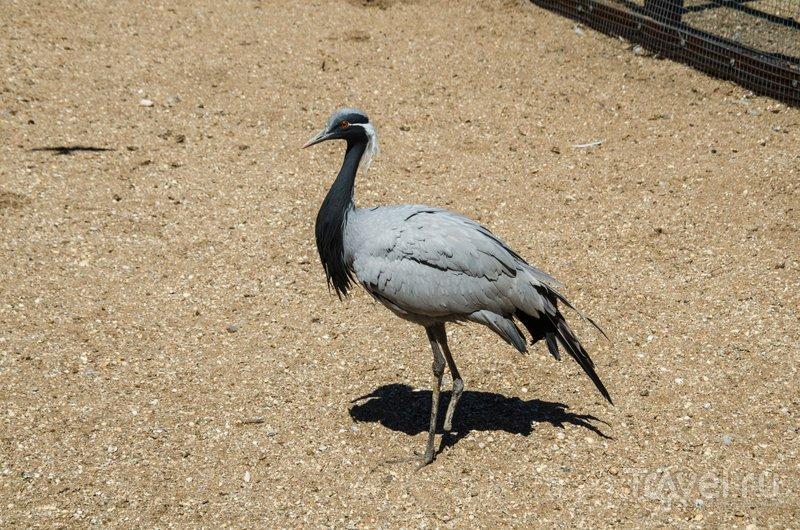 На территории зверинца обитает много птиц