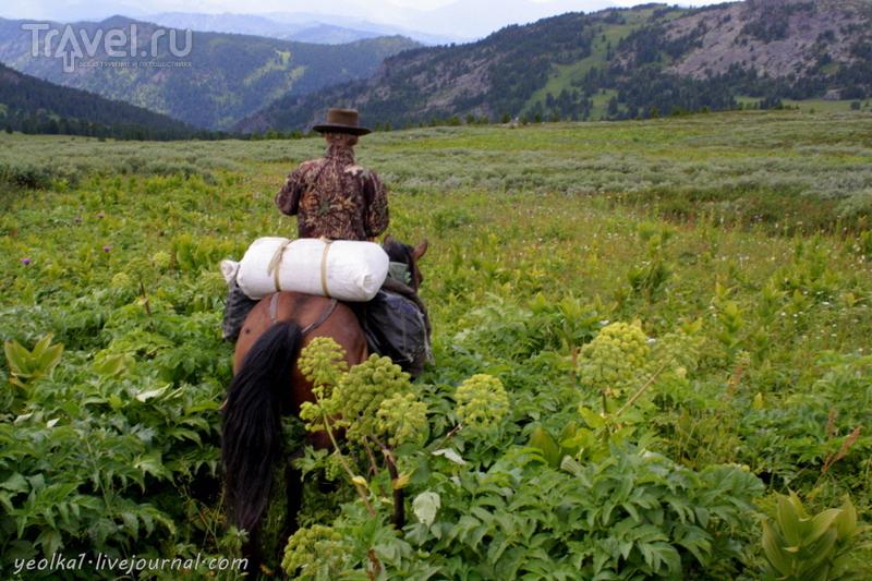 По Горному Алтаю на конях. По следам медведя: из Бай-Аюка в Ишмеш через 2 перевала / Россия