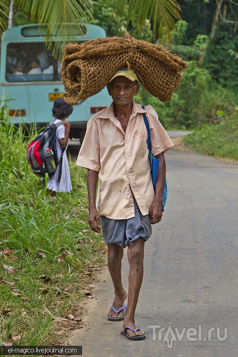 Кого можно повстречать, забравшись в глухие деревни Шри-Ланки / Шри-Ланка