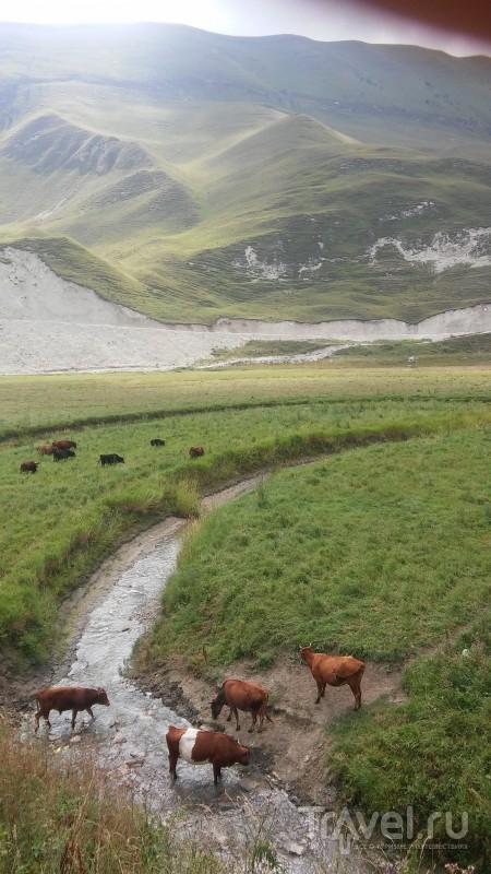 Современная Чечня. Горы и приоры / Россия