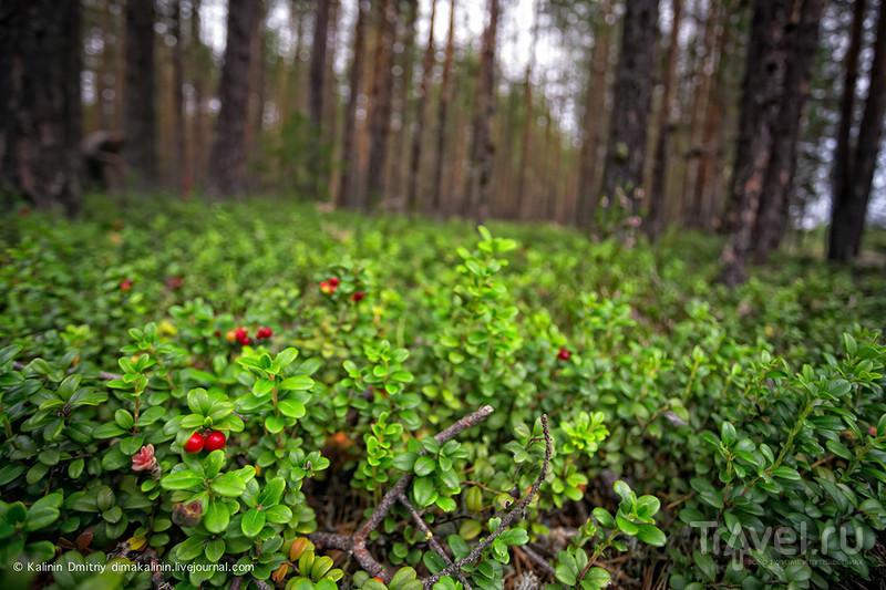 Финляндия на новый год места