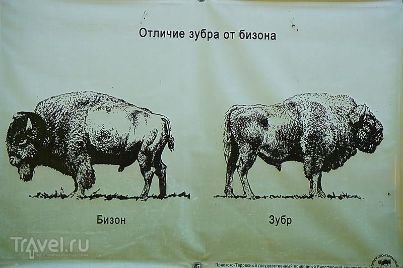 Приокско-Террасный заповедник / Россия