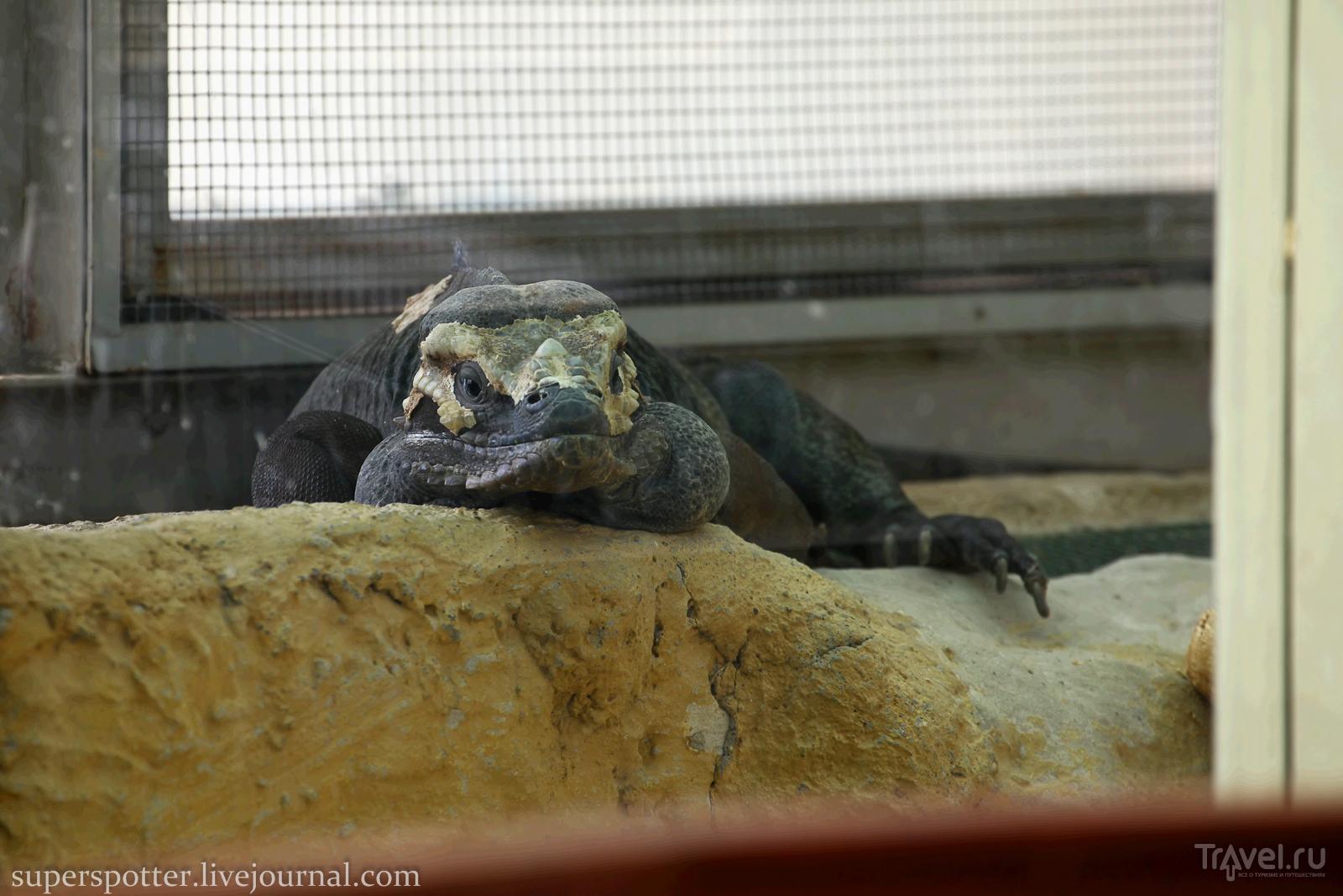 Будапештский зоопарк / Венгрия