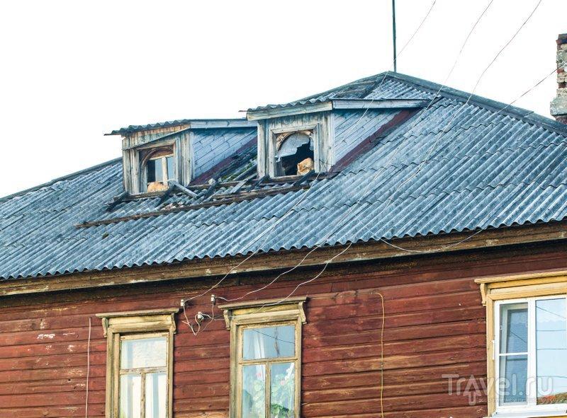 Коты на чердаке старого дома / Фото из России
