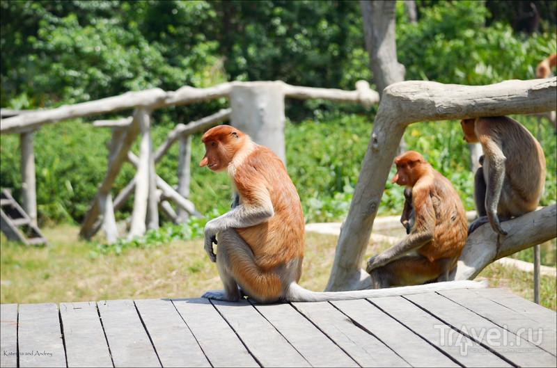 Носачи острова Борнео. Малайзия, март 2015 / Фото из Малайзии
