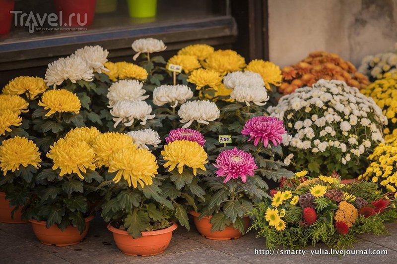 Любляна: неожиданно прекрасная / Фото из Словении