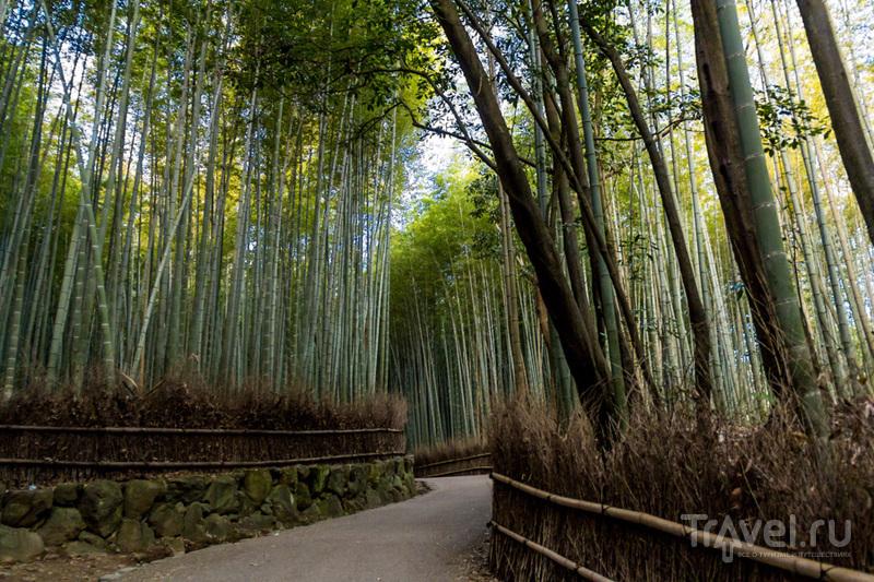 Арасияма: бамбуки и обезьяны / Фото из Японии