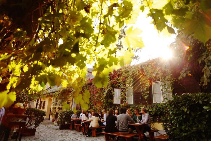Золотая осень: чем заняться в Вене в октябре