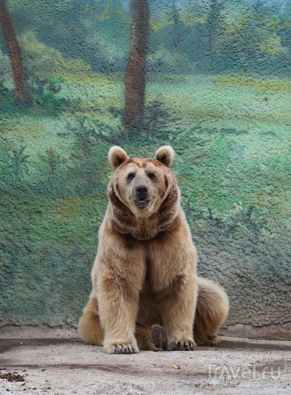 Прогулка в Ростовском зоопарке / Россия