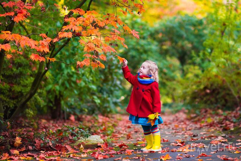 На юге России в ноябре можно застать красивую осень