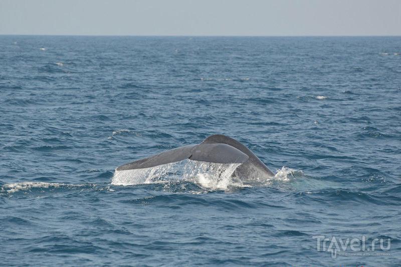Как я повстречал самое большое животное на земле в водах Шри-Ланки / Фото со Шри-Ланки