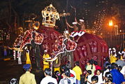 Слоны на шествии в честь выноса Священного Зуба Будды / Шри-Ланка