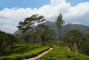 Природа Нувара-Элии / Шри-Ланка