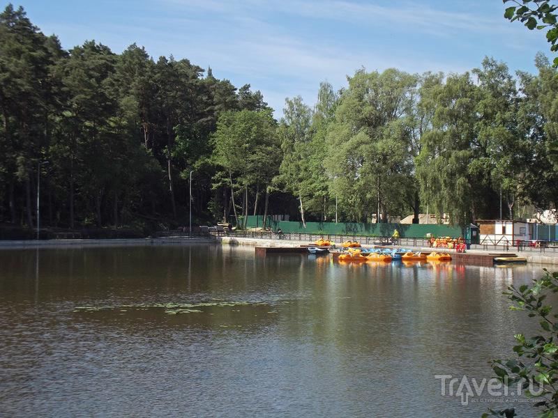 Светлогорск / Фото из России