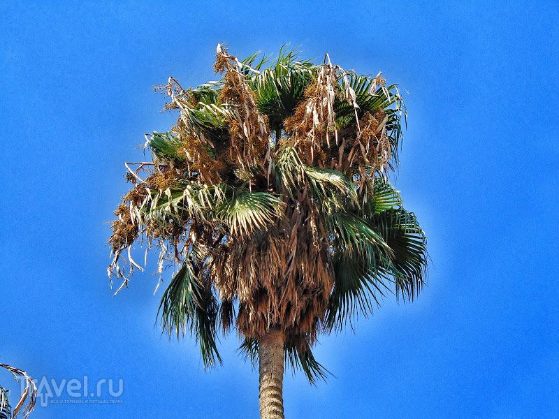 Две гордые пальмы в Лимассоле / Кипр