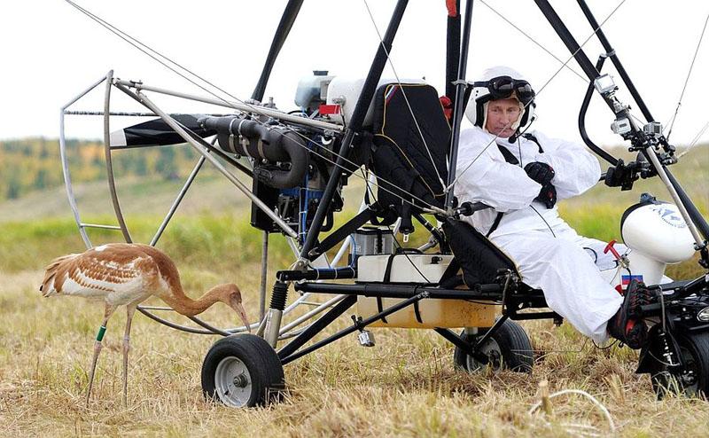 В.В. Путин перед полетом со стерхами