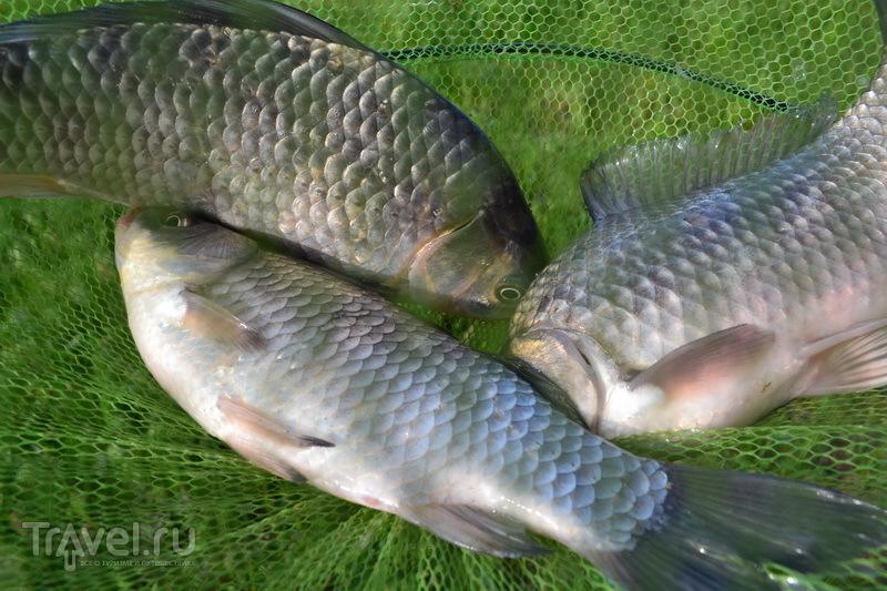 Рыба для Донской ухи